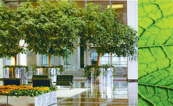 Interior plants commercial landscaping interior for Manapat interior landscape designs